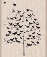 Many Birds F4849